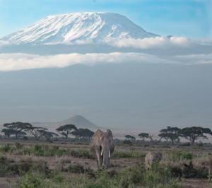 Elephant and Mt. Kilimanjaro
