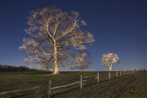 Oak, Neward Road